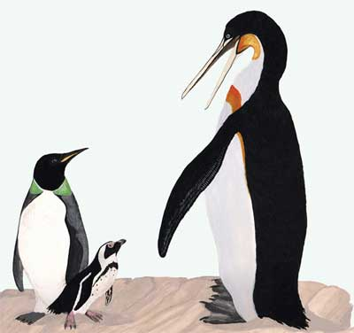 Ancient giant penguins