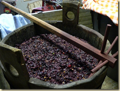Grapes being made into must