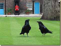Ravens have lived at the tower for centuries