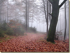 An image showing the terrain in the Teutoburg Forest